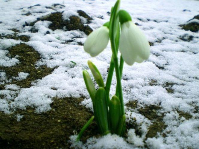 весна 3